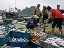 Infographic: Hải sản nào ăn được ở 4 tỉnh miền Trung?