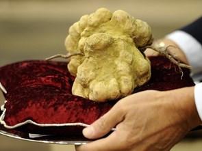 """Nấm truffle: """"Kim cương của nhà bếp"""""""