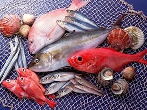 Hai loại cá có chứa nhiều thủy ngân cần biết