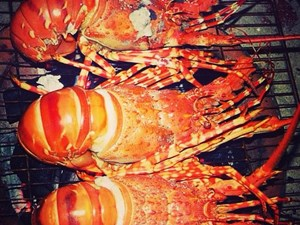 Lobster Guide: Claws Converge On Five Islands
