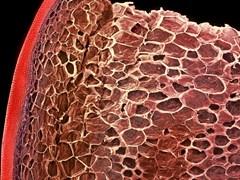 Vẻ lạ lẫm của thực phẩm dưới kính hiển vi