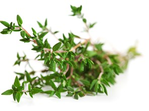 Mighty Thyme: Everything You Ever Wanted to Know About This Tiny Herb