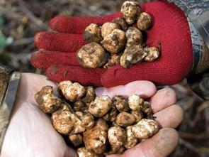 Mushroom – The Representative Cuisine of the Fall: Imported Mushrooms