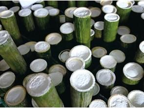 Muối tre - dược liệu truyền thống 1.000 năm của Hàn Quốc