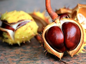9 Numbers behind... Chestnuts