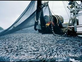 Các đầu bếp hàng đầu châu Âu nói 'không' với hải sản đánh bắt bằng xung điện