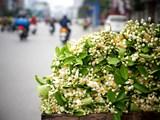 """Hoa bưởi – """"Mỹ thực"""" của đất Hà thành"""