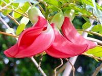 Thuốc quý từ những loài hoa của miền Tây sông nước