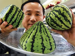 New and interesting types of watermelon