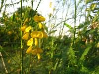 Hương phù sa: Những bến sông vàng