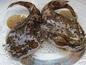 Cá mao ếch - đặc sản nhiều người không dám thử ở Cần Giờ