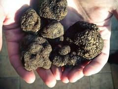 Từ A đến Z: 26 điều thú vị về nấm truffle