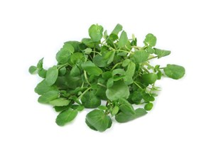 What Is Watercress?